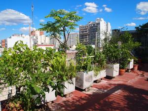 Huerta_urbana